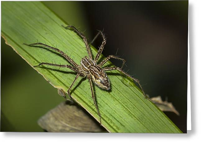 Jean Noren Greeting Cards - Tropical Spider Greeting Card by Jean Noren