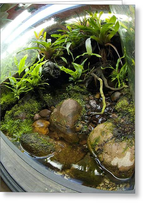 Moist Greeting Cards - Tropical Vivarium Greeting Card by Angel Fitor