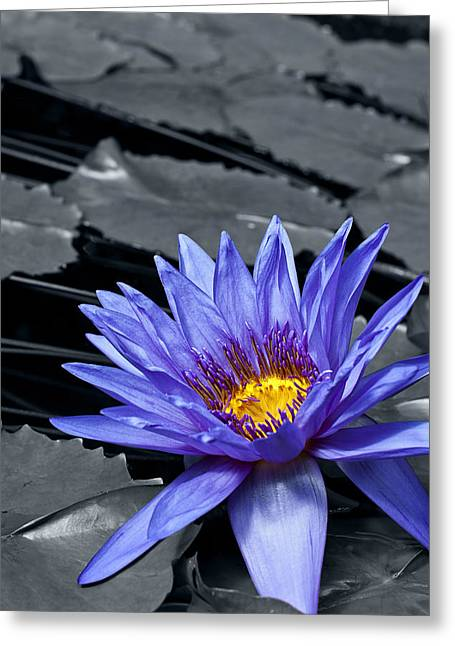 Colorkey Digital Greeting Cards - Tropical Waterlily Greeting Card by Design Windmill