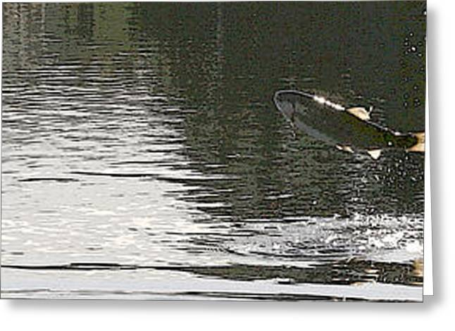 Rainbow Trout Greeting Cards - Trout Hunting Greeting Card by John Bradburn
