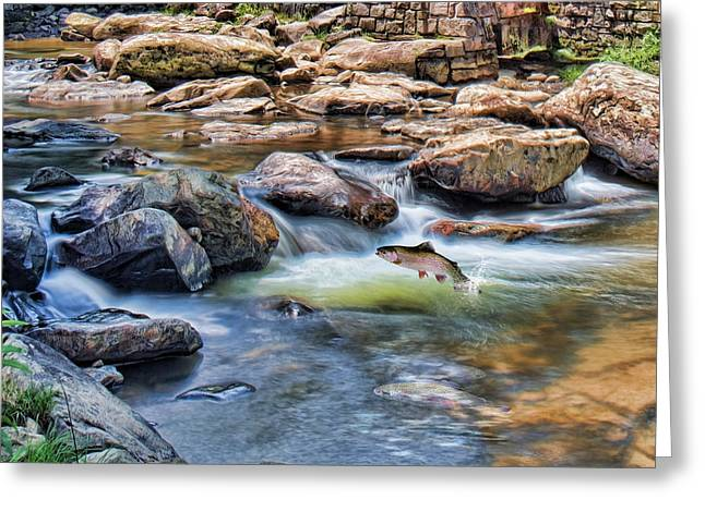 Trout Stream Greeting Card by Mary Almond