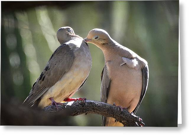 Mourning Dove Greeting Cards - True Love  Greeting Card by Saija  Lehtonen