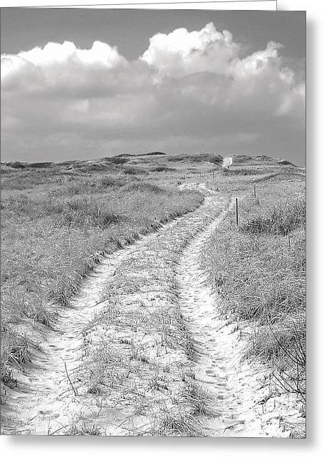 Truro Greeting Cards - Truro Dune Trail Greeting Card by Charles Harden