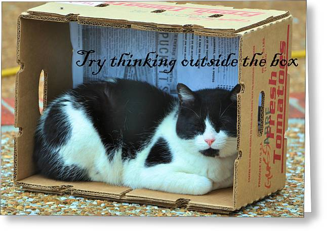 Cardboard Greeting Cards - Try Thinking Outside The Box Greeting Card by Jan Amiss Photography