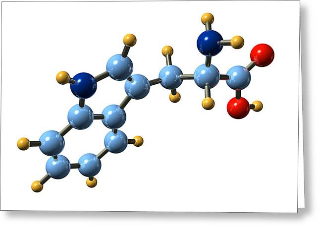 Essential Greeting Cards - Tryptophan, Molecular Model Greeting Card by Dr Mark J. Winter