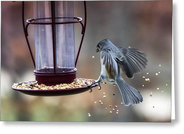 Tufted Titmouse Greeting Cards - Tufted Seed Splash Greeting Card by Bill Tiepelman