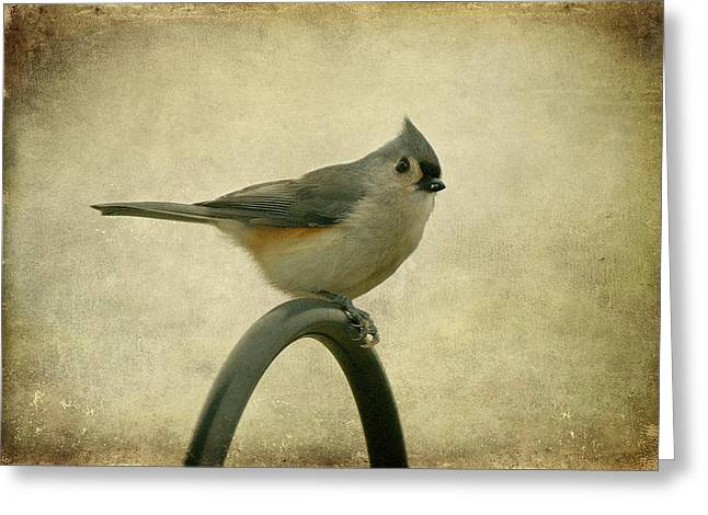 Gray Bird Greeting Cards - Tufted Titmouse II Greeting Card by Sandy Keeton