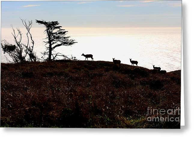 Tule Elks Greeting Cards - Tule Elks of Tomales Bay Greeting Card by Wingsdomain Art and Photography