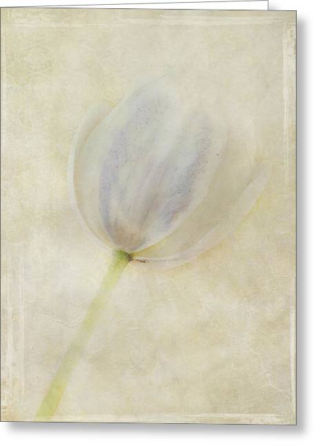 Flora Greeting Cards - Tulip 1 Greeting Card by Marion Galt
