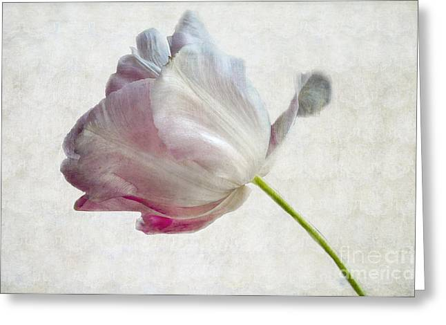 Galt Greeting Cards - Tulip 2 Greeting Card by Marion Galt
