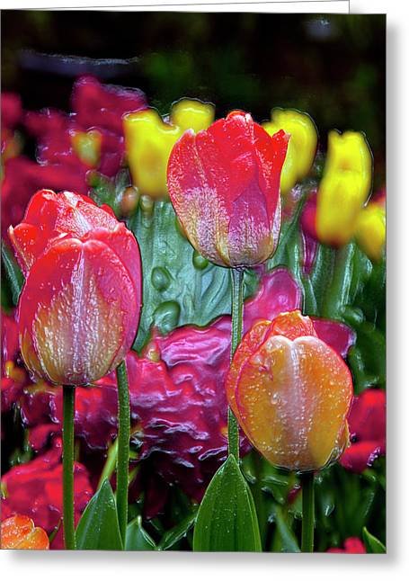 Wine Deco Art Digital Art Greeting Cards - Tulip Candy Greeting Card by Don  Wright