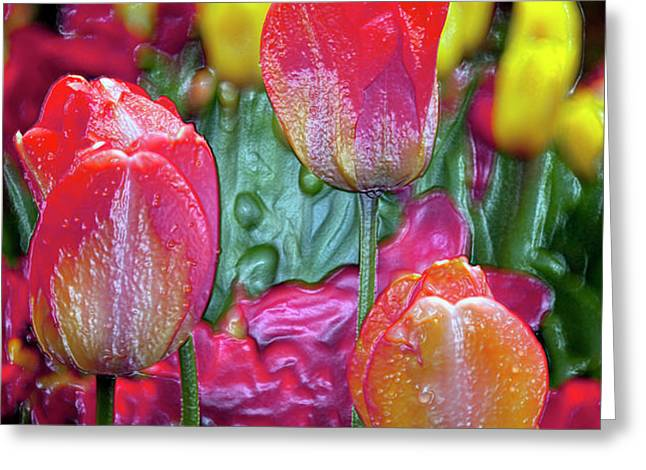 Tulip Candy Greeting Card by Don  Wright