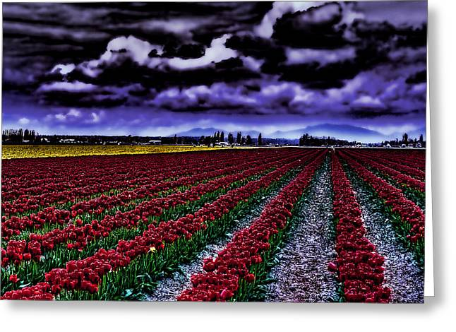 Hdr Landscape Greeting Cards - Tulip Fields Greeting Card by David Patterson