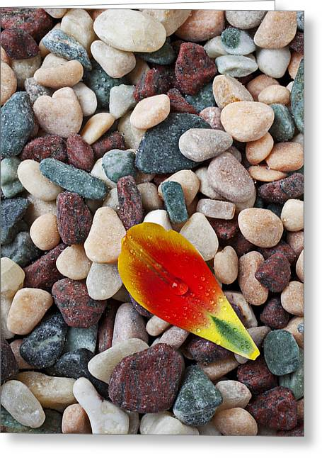 Geology Photographs Greeting Cards - Tulip petal and wet stones Greeting Card by Garry Gay