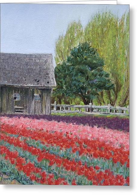 Barn Pastels Greeting Cards - Tulip Season Greeting Card by Marie-Claire Dole