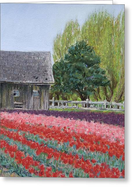 Farming Pastels Greeting Cards - Tulip Season Greeting Card by Marie-Claire Dole