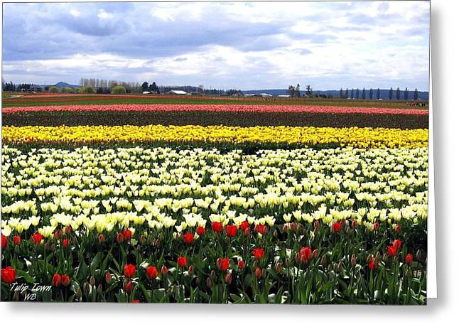 Multihued Greeting Cards - Tulip Town 4 Greeting Card by Will Borden