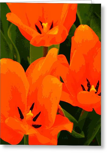 Spring Bulbs Greeting Cards - Tulip Trio Greeting Card by Chris Berry
