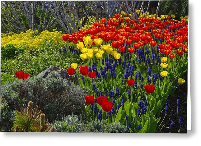 Tulips And Bluebells Greeting Card by John  Greaves