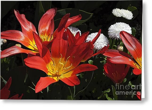 Bellis Greeting Cards - Tulips and Daisies Greeting Card by Louise Heusinkveld