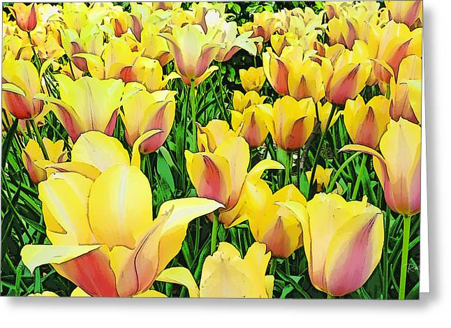 Tulips In New York  Greeting Card by Russ Harris