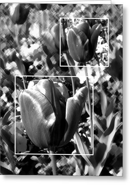 Roberto Alamino Greeting Cards - Tulips Greeting Card by Roberto Alamino