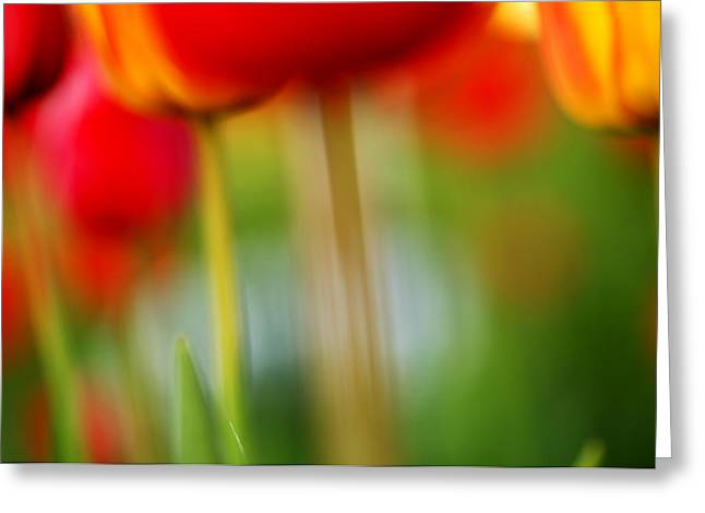 Up Close Flowers Greeting Cards - Tulips Greeting Card by Silke Magino