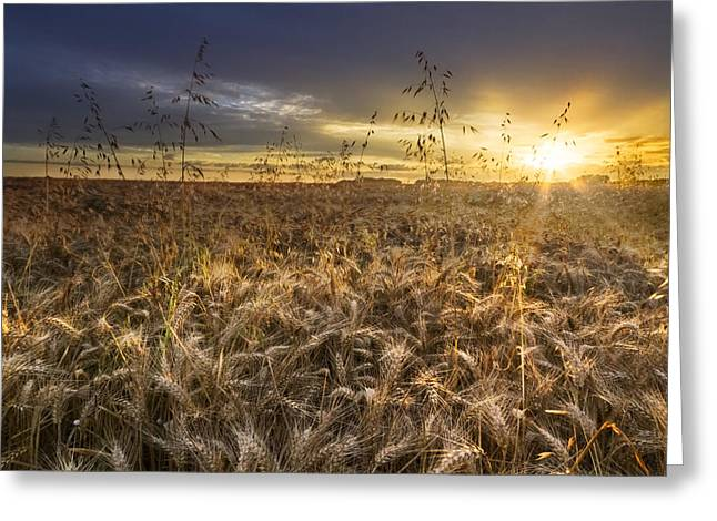 Swiss Photographs Greeting Cards - Tumble Wheat Greeting Card by Debra and Dave Vanderlaan