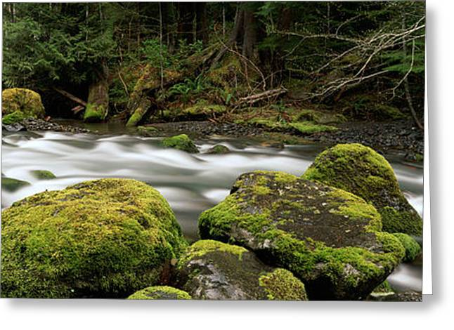 Brookes Greeting Cards - Tunnel Creek, Olympic National Forest Greeting Card by Ron Watts