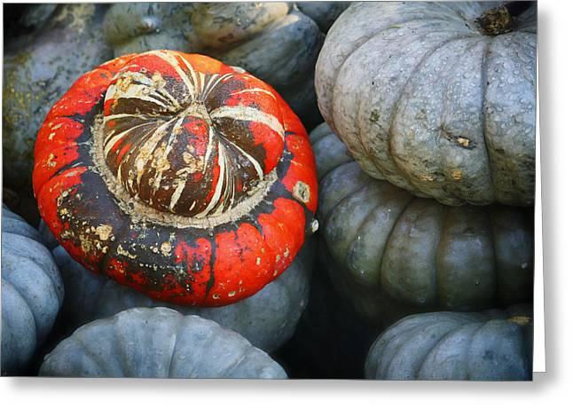 Dallas Arboretum Greeting Cards - Turban pumpkin Greeting Card by Joan Carroll