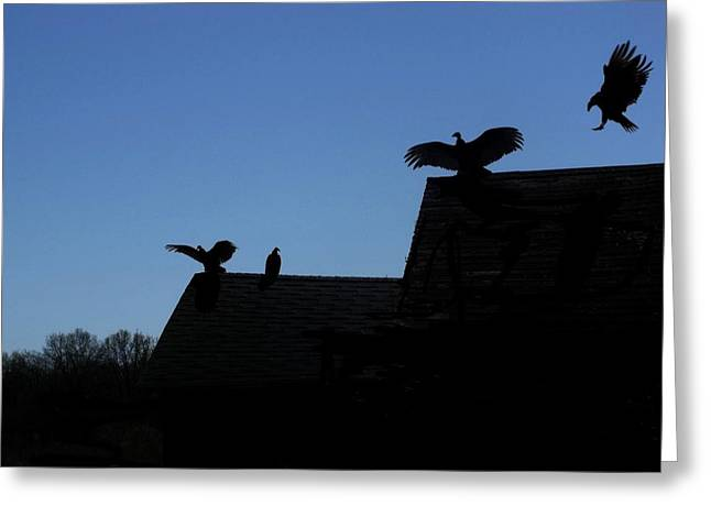 Vulture Silhouettes Greeting Cards - Turkey Vultures Greeting Card by Dave Dresser