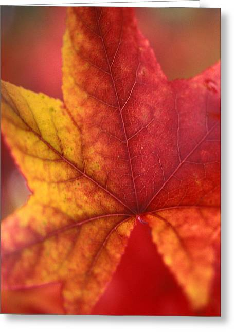 Autumn Prints Photographs Greeting Cards - Turn Turn Turn Greeting Card by Kathy Yates