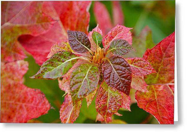 Turning Leaves Digital Art Greeting Cards - Turning Leaves Greeting Card by Robert Joseph