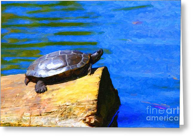 Bask Greeting Cards - Turtle Basking In The Sun Greeting Card by Wingsdomain Art and Photography