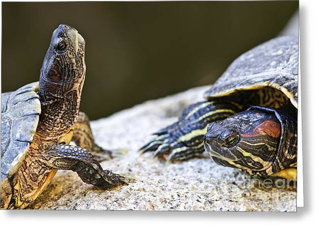 Tropical Wildlife Greeting Cards - Turtle conversation Greeting Card by Elena Elisseeva