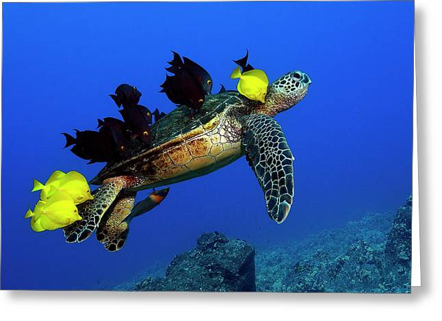 Best Sellers -  - Pacific Ocean Prints Greeting Cards - Turtle grooming Greeting Card by Andre Seale