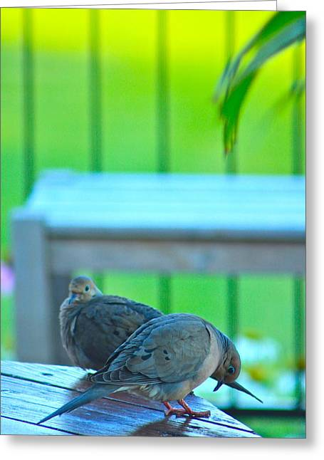 Couple Greeting Cards - TurtleDove Greeting Card by Jordan  Drapeau