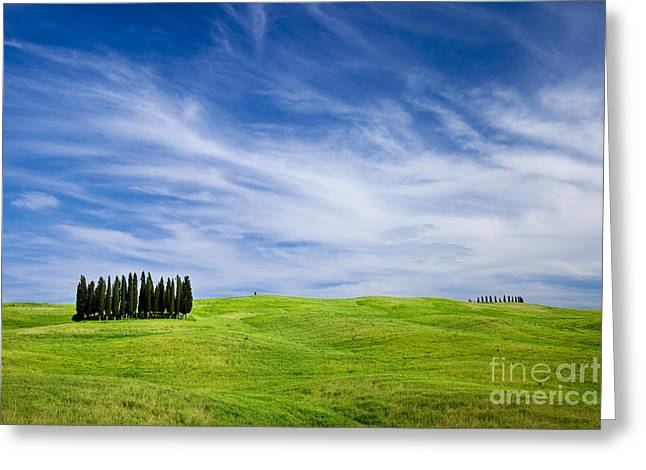 Tuscan Hills Greeting Cards - Tuscany Cypress Greeting Card by Brian Jannsen