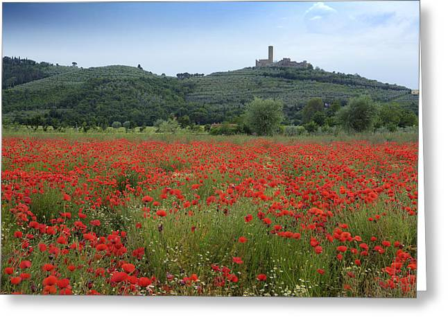 Hilltown Greeting Cards - Tuscany Poppies 1 Greeting Card by Al Hurley