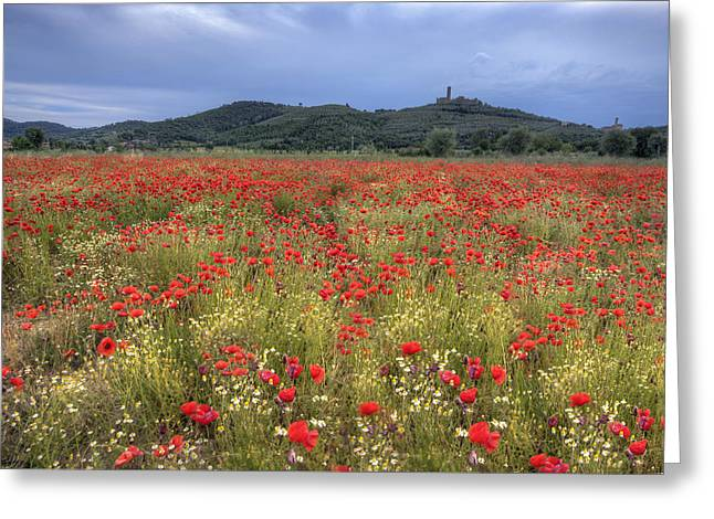 Hilltown Greeting Cards - Tuscany Poppies 2 Greeting Card by Al Hurley