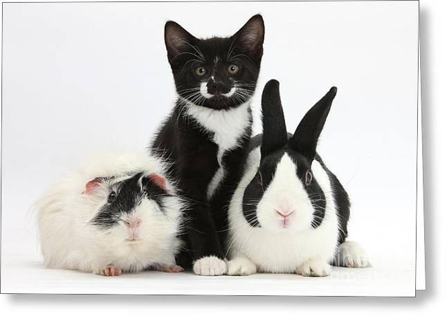 Tuxedo Greeting Cards - Tuxedo Kitten With Black Dutch Rabbit Greeting Card by Mark Taylor