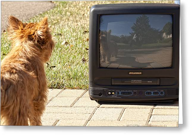 Tv Watching Dog Greeting Card by Susan Stone