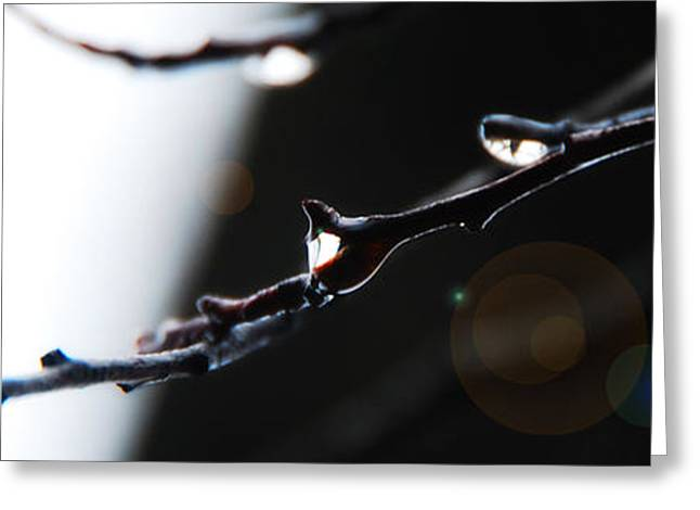 Abstract Rain Greeting Cards - Twig Greeting Card by Simone Hester