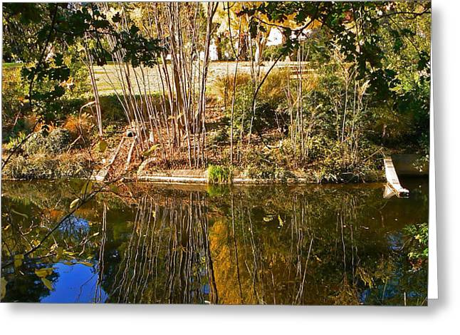 Twiggy Reflections Greeting Card by Pamela Patch