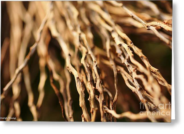 Wall Art For Your Home Greeting Cards - Twigs Greeting Card by Cheryl Young