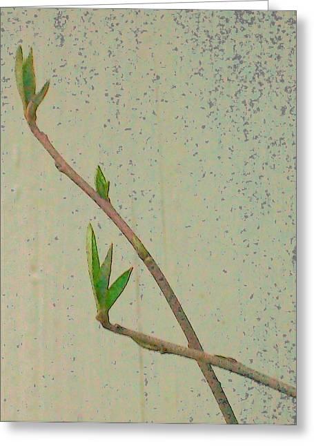 Greening Greeting Cards - Twigs Greeting Card by Wide Awake Arts