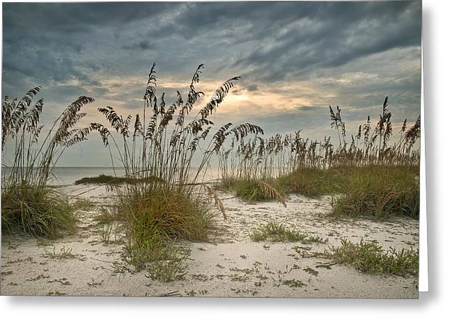 Sea Oats Greeting Cards - Twilight Sea Oats Greeting Card by Steven Sparks