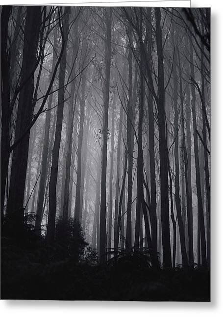 Park Scene Greeting Cards - Twilight View Of A Forest Of Mountain Greeting Card by Jason Edwards