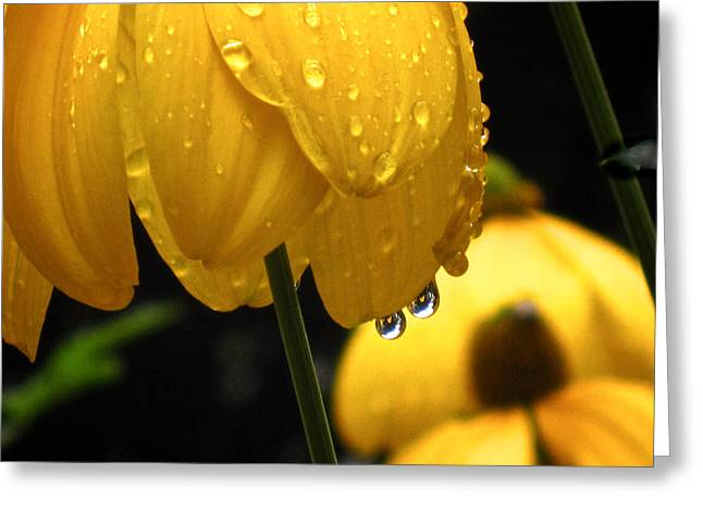 Yellow Coneflower Greeting Cards - Twin Drops Greeting Card by Richard Cummings
