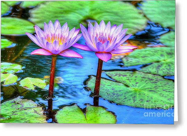 Waterlillies Greeting Cards - Twin Lilies Greeting Card by Debbi Granruth